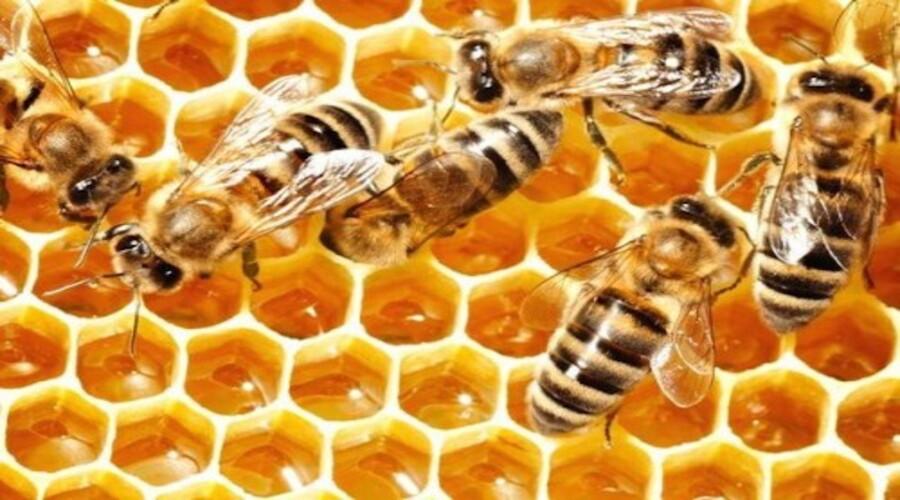 Le miel au thym contre les maladies hivernales !