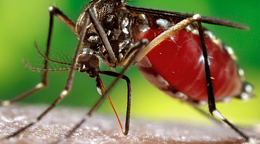Comprendre le Virus Zika